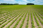 Advanced Sugar Beet Programme